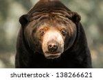 Sun Bear Profile At The Omaha...