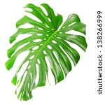 single monstera leaf isolated... | Shutterstock . vector #138266999