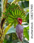 Banana Tree With Flower And...