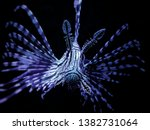The Lionfish  A Tropical...
