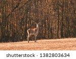 Buckskin Colored Camouflage...
