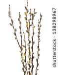 Branches Of The Pussy Willow...