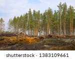 felling with felled forest and... | Shutterstock . vector #1383109661