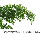 green leaves and branches on... | Shutterstock . vector #1383382667