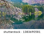 cherry blossoms blooming on the ... | Shutterstock . vector #1383690581