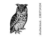 Owl. Realistic Bird Isolated O...