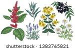 set of medical herbs. amaranth  ... | Shutterstock .eps vector #1383765821