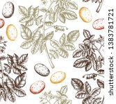 hand drawn potato background.... | Shutterstock .eps vector #1383781721