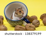 Hamster In A Colorful Old Cup...