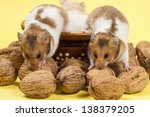 Hamsters In A Colorful Old Cup...