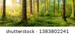 beautiful forest in spring with ... | Shutterstock . vector #1383802241