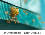 Stingless bees flying around the nest, Stingless bees on nest hole, blue background, Apinae, Brazil