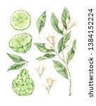 watercolor botanical...   Shutterstock . vector #1384152224