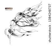 hand drawn macrocystis seaweed... | Shutterstock .eps vector #1384248737