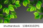 green leaves. summer realistic... | Shutterstock .eps vector #1384310291