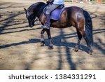 horse animal equestrian rider... | Shutterstock . vector #1384331291