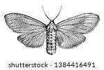 milkweed tiger moth is an... | Shutterstock .eps vector #1384416491
