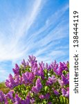 Lilac Bush On A Background Of...