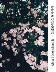 white and pink desert flowers...   Shutterstock . vector #1384559444