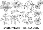 vector set branches and leaves  ... | Shutterstock .eps vector #1384657007