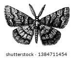 male geometer moths are moths... | Shutterstock .eps vector #1384711454