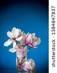 spring beautiful blooming... | Shutterstock . vector #1384847837