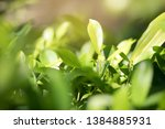 blurred image of nature view  ... | Shutterstock . vector #1384885931