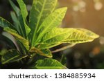 blurred image of nature view  ... | Shutterstock . vector #1384885934