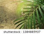 blurred image of nature view  ... | Shutterstock . vector #1384885937