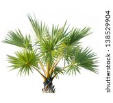 palm tree adorned garden on... | Shutterstock . vector #138529904