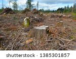 clear cut land of felled trees... | Shutterstock . vector #1385301857