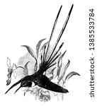 peruvian sheartail is a...   Shutterstock .eps vector #1385533784