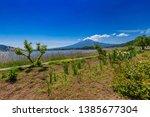fuji mountain and lavender... | Shutterstock . vector #1385677304