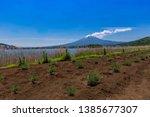 fuji mountain and lavender... | Shutterstock . vector #1385677307