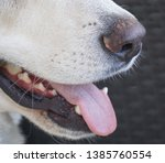 close up of white german...   Shutterstock . vector #1385760554