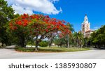 Red Royal Poinciana Tree In...