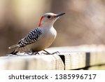 fauna avian colourful colorful... | Shutterstock . vector #1385996717