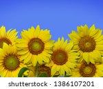 Bunch Sunflowers Hires  - Fine Art prints