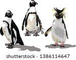 African Penguins And Rockhopper ...
