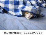 Ginger Cat Hide And Seek