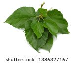 Green Mulberry Leaf Isolated On ...