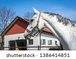 horse head close up. white... | Shutterstock . vector #1386414851