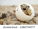 Africa Spurred Tortoise Are...