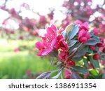 beautiful pink flowers of... | Shutterstock . vector #1386911354