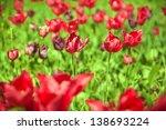 red tulips | Shutterstock . vector #138693224
