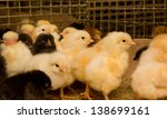 chickens. poultry farm | Shutterstock . vector #138699161