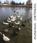Ducks  Ducks  And More Ducks ...