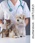 Animal doctor closeup with pets - a kitten and a small dog - stock photo