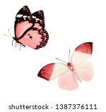 Stock photo two color butterflies flying isolated on white background 1387376111