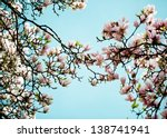 Flowering Magnolia Tree Densel...